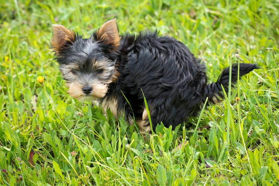 Dog Diarrhea - Causes, symptoms, and treatment