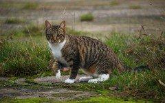 Vermifugo per gatti, quale scegliere tra i numerosi in commercio