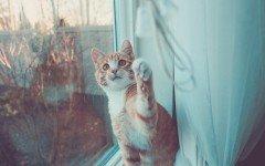 Come educare un gatto: alcuni consigli utili