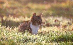 Zecca gatto: tutto quello da sapere su questo parassita