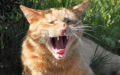 Morso del gatto: che cosa fare quando il felino ci morde