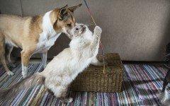 I migliori giochi per cani e gatti quali sono?