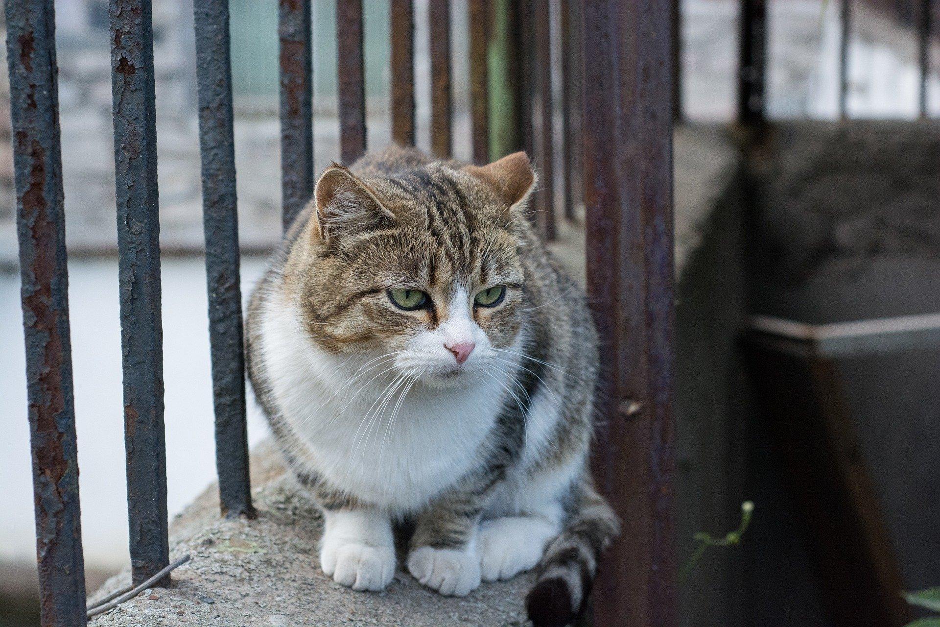 Gatto malato: quali sono i segnali da monitorare?