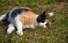 Gatti colorati: caratteristiche e differenze fra tipologie di mantello