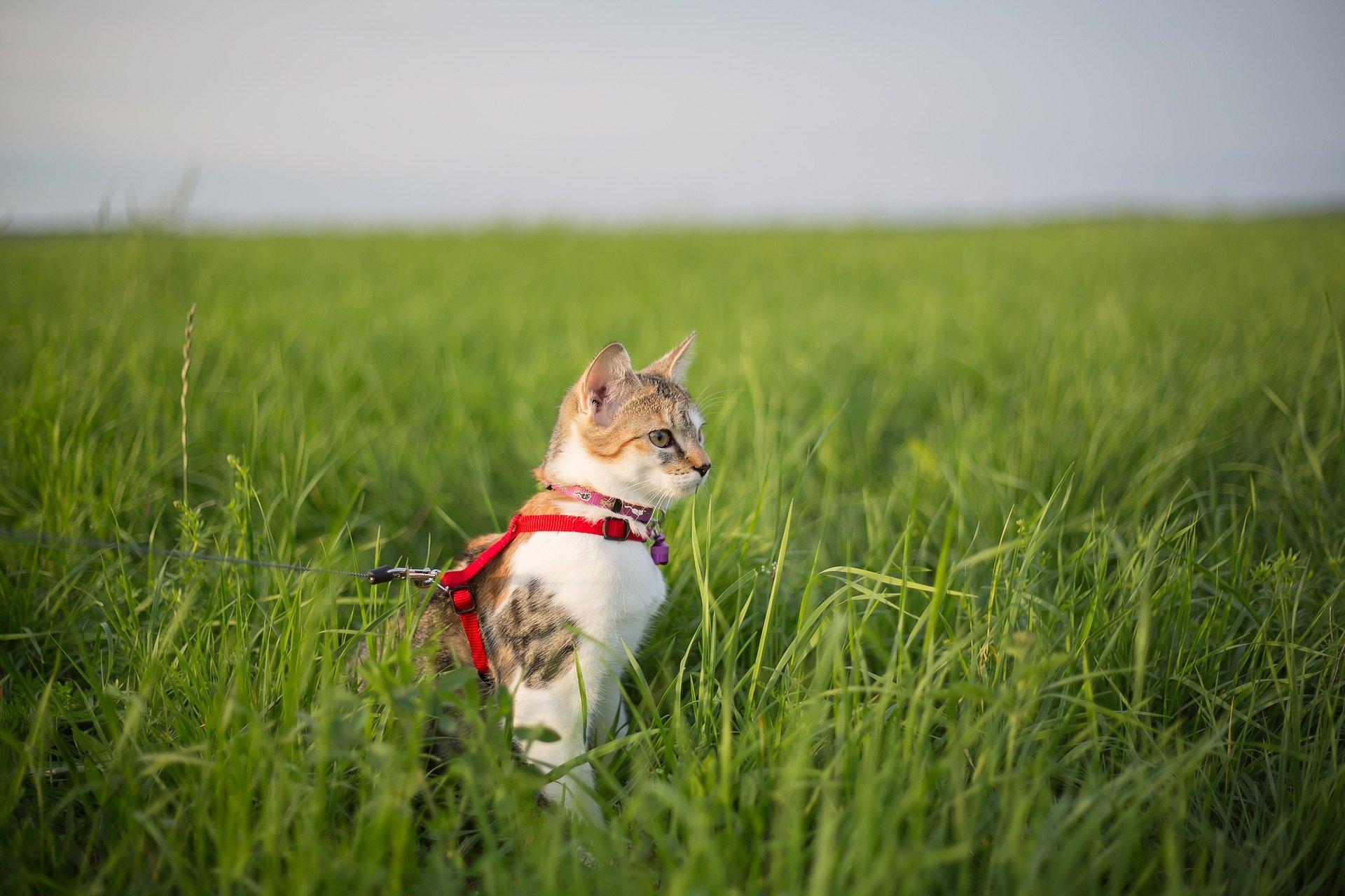 Guinzaglio per gatti tutte le caratteristiche