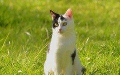 Tenia gatto: i sintomi, la diagnosi e la cura