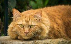 Gatto non mangia cosa fare? Cause e sintomi