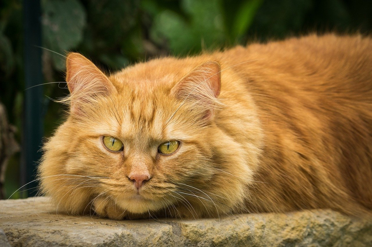 Gatto non mangia cosa fare cause e sintomi dogalize for Cosa mangia il gatto