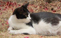 Repellenti per gatti quando utilizzarli e come sceglierli