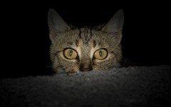 Gatto spaventato, ecco le possibili cause
