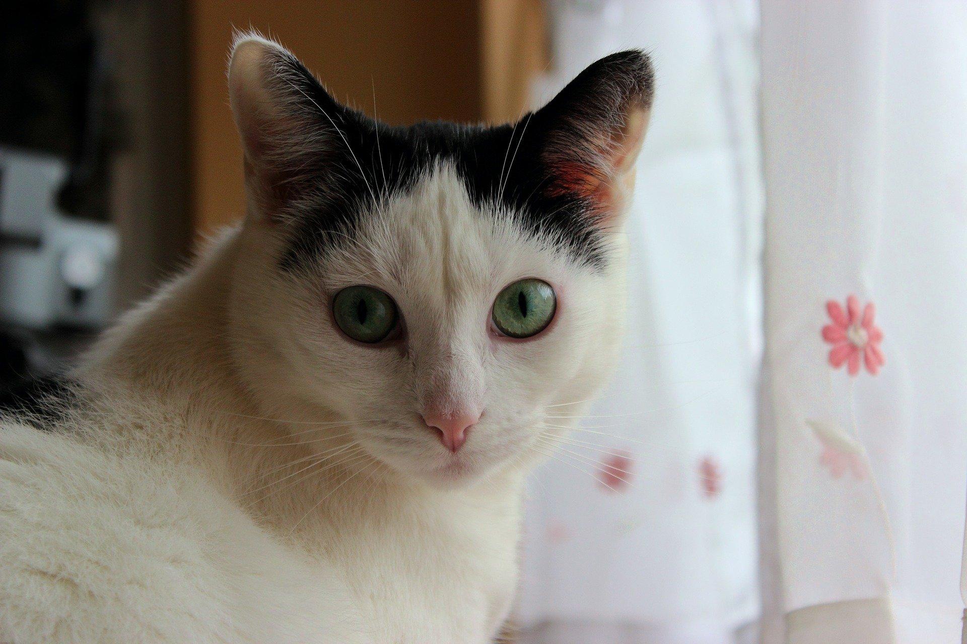 Dermatite gatto: le cause, i sintomi e le cure