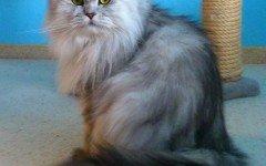 Tiragraffi gatto: ottimi per mettere in salvo l'arredamento