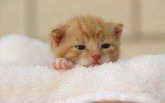 Quando aprono gli occhi i gattini appena nati