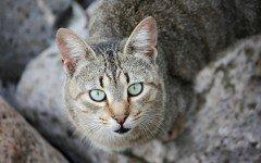 Micosi da gatto: la trasmissione all'uomo e i sintomi