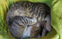 Cuccia per gatti da esterno, come deve essere