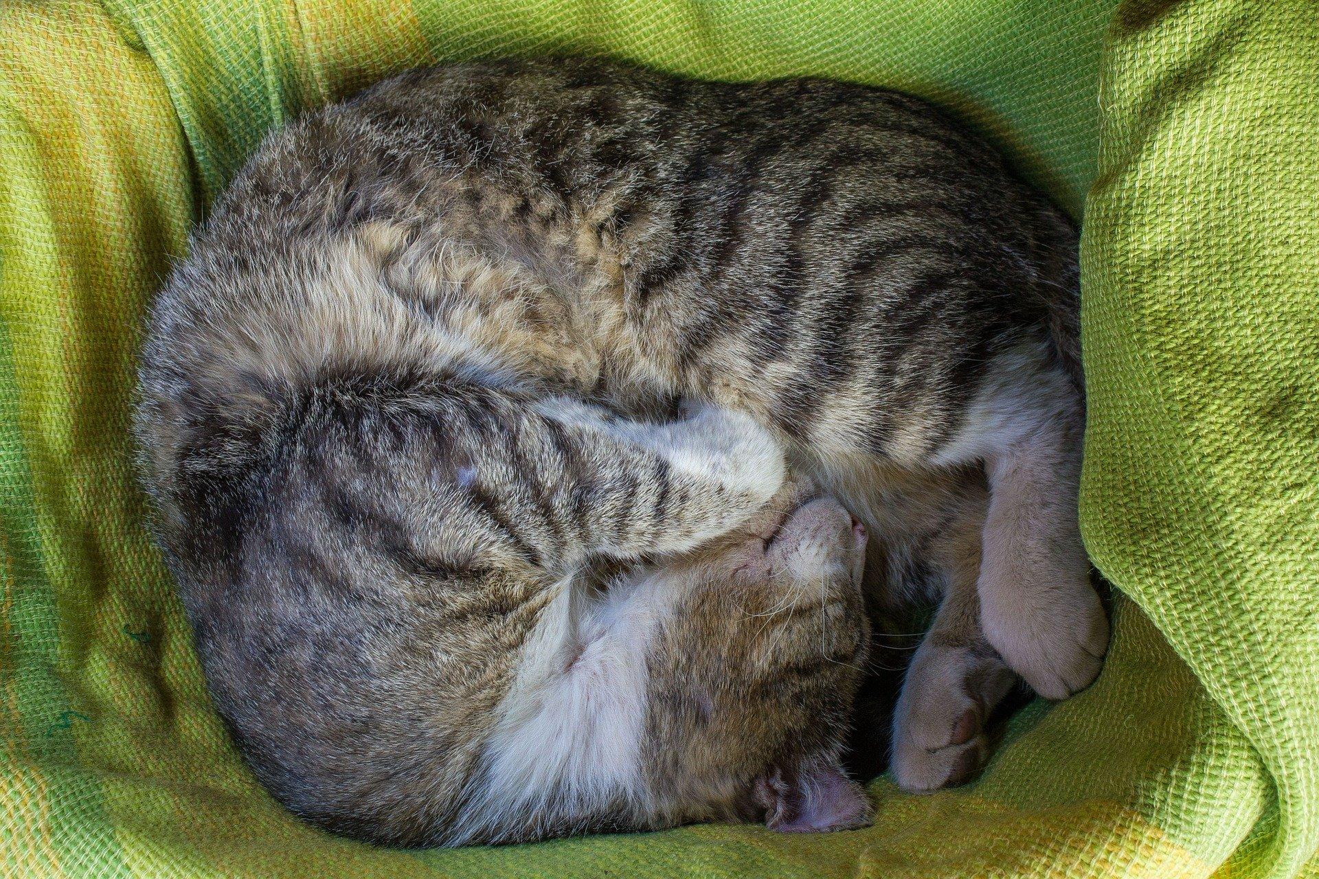 Cuccia per gatti da esterno come deve essere dogalize for Cucce per gatti da esterno coibentate
