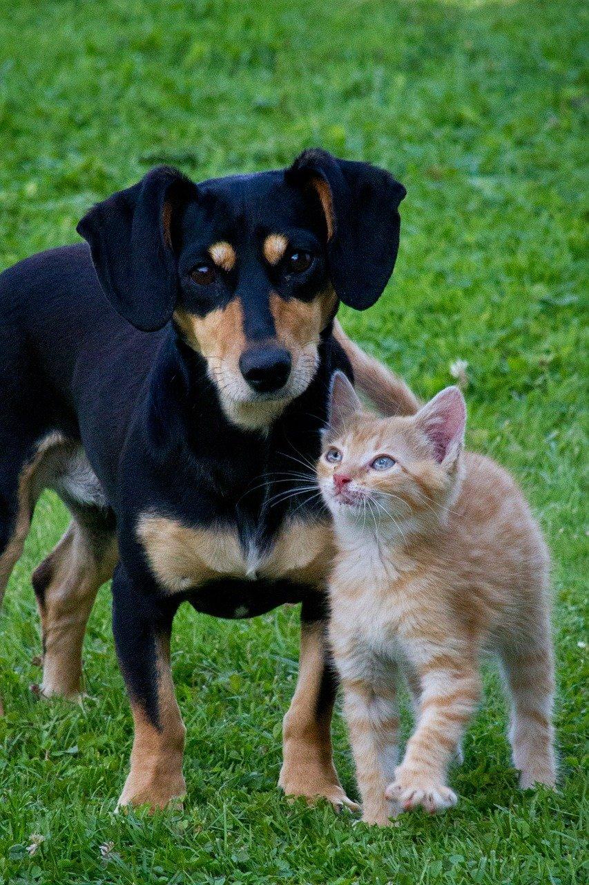 Giochi di cani e gatti: acquisti e fai da te