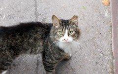Antipulci gatto: alla scoperta dei rimedi naturali e commerciali