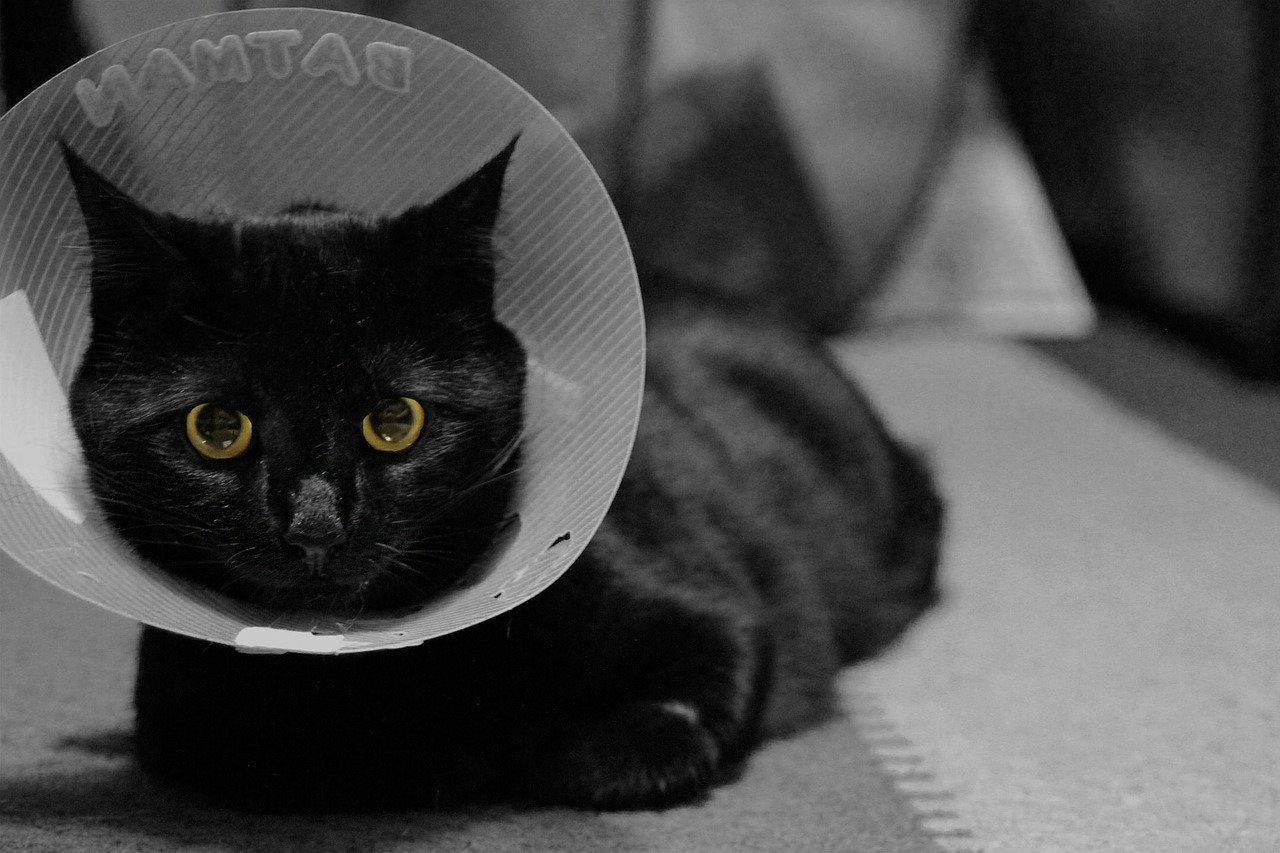 Collare elisabettiano per gatto a cosa serve e prezzo