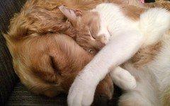 Addestrare un cane con i gatti a stare insieme in casa