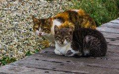 Gatti randagi come comportarsi con loro