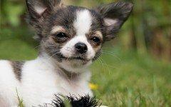 Linguaggio dei cani, cosa vogliono dirci i nostri amici