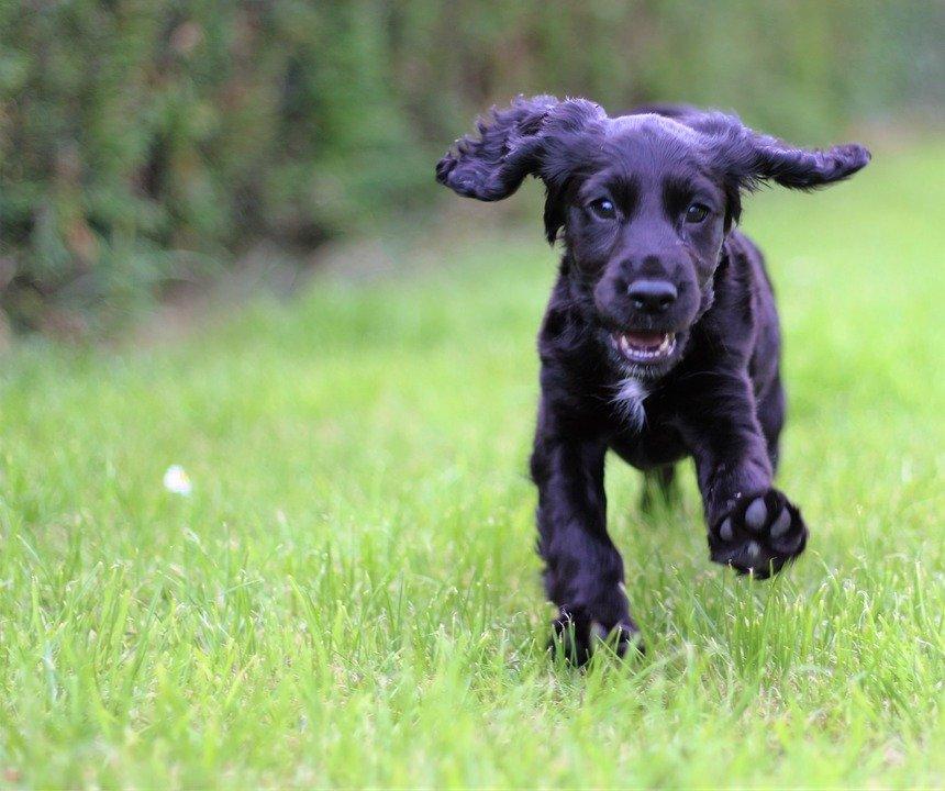 Cuidados de las orejas de tu perro: recomendaciones