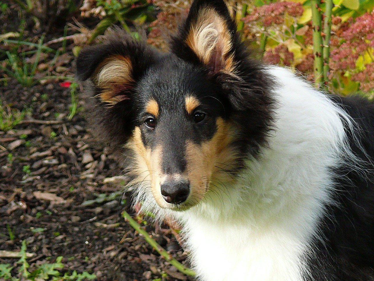 Cura del pelo dei cani: come spazzolare il mantello