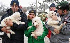 Emergenza valanga: salvi i cuccioli mascotte dell'Hotel Rigopiano, sommerso dalla neve pochi giorni fa