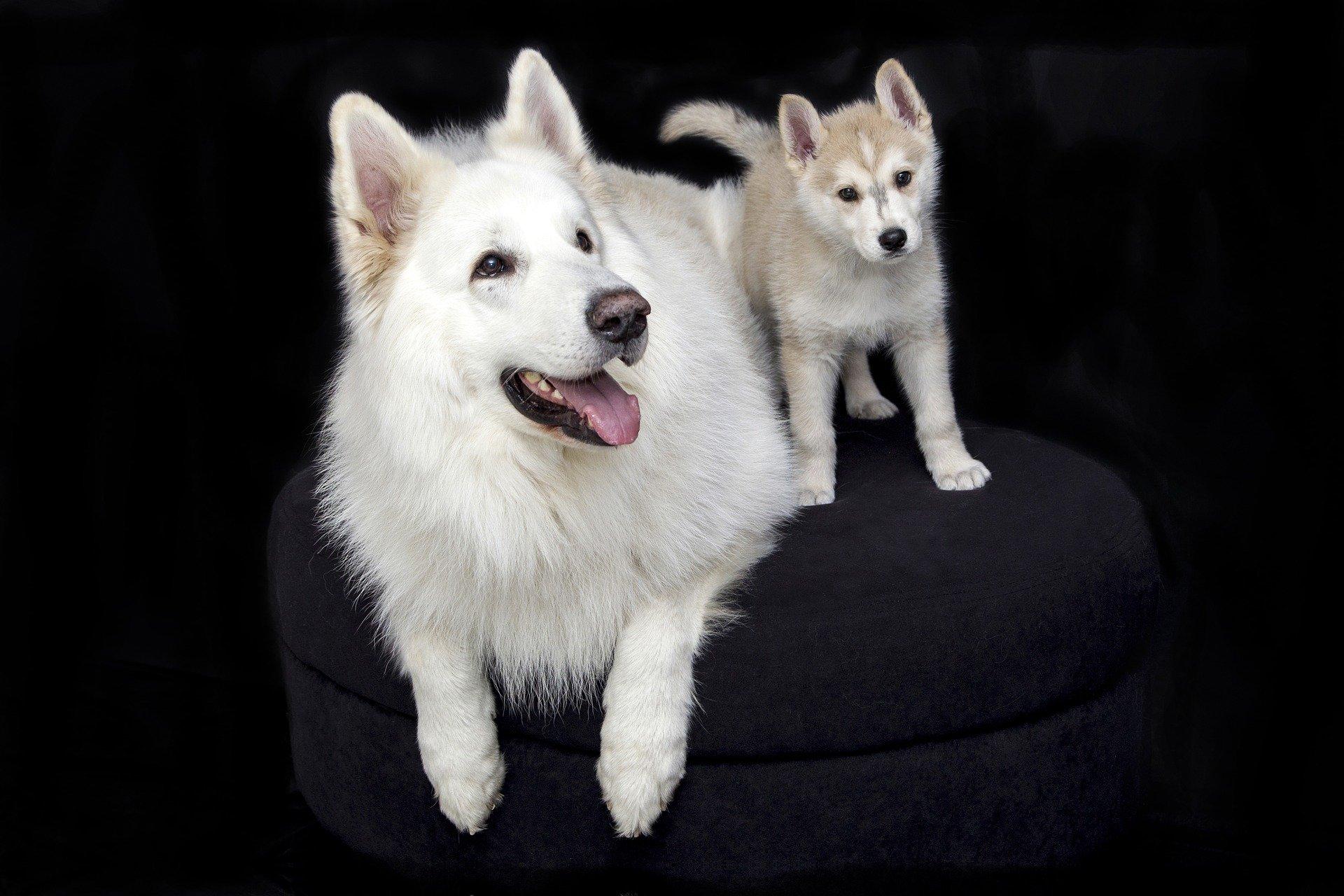 Età dei cani: scopriamo come calcolarla