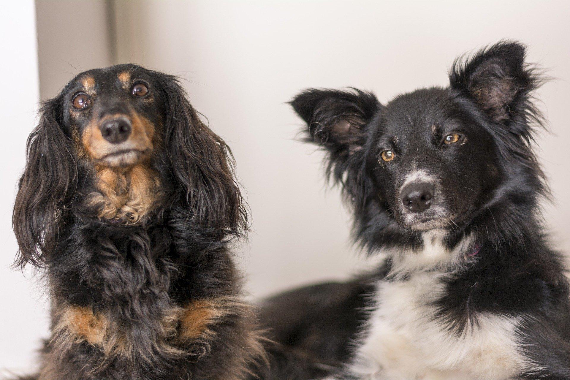 Come prendersi cura del cane a pelo lungo