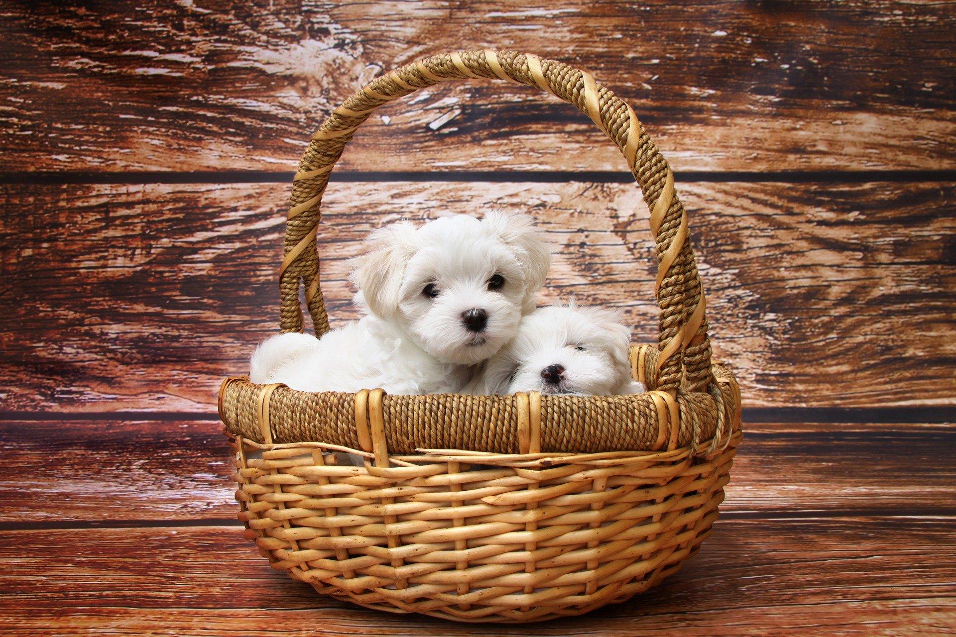 Sognare cuccioli di cane cosa vuol dire?