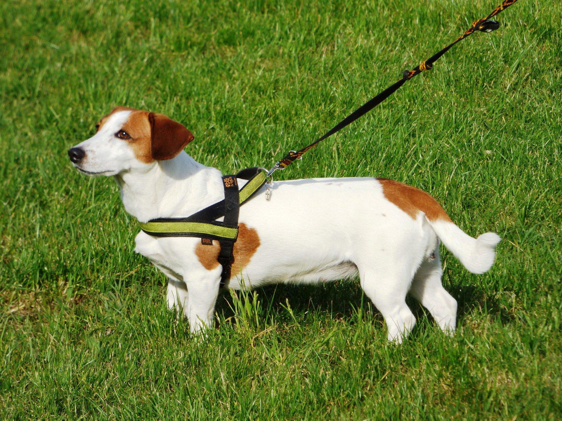Guinzaglio per cani, fedele alleato per cane e padrone