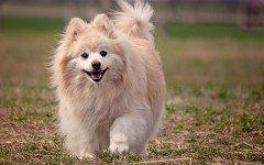 Sognare cani: il vero significato di questi sogni