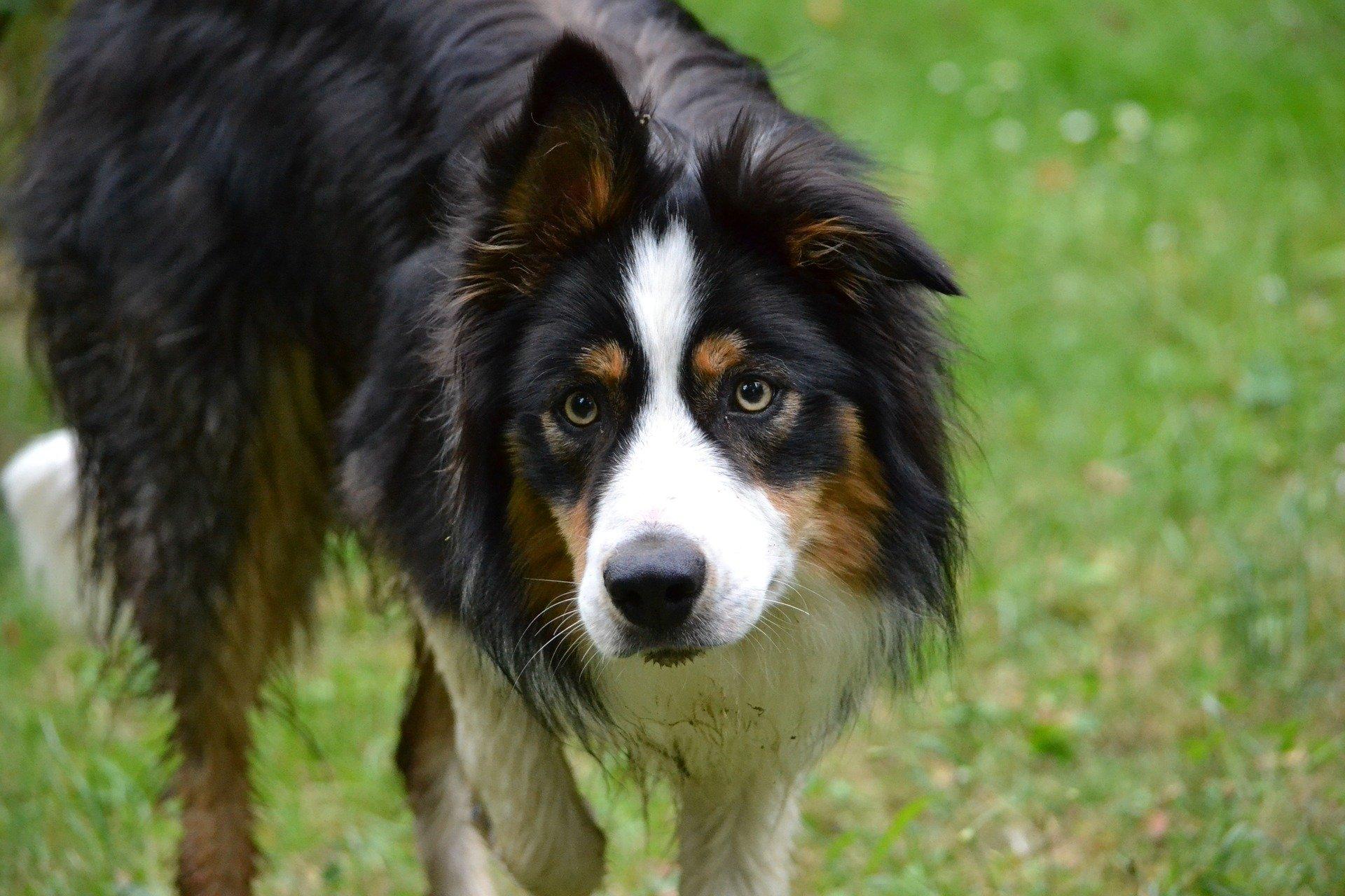 Sangue nelle feci del cane: cause, cure e prevenzione