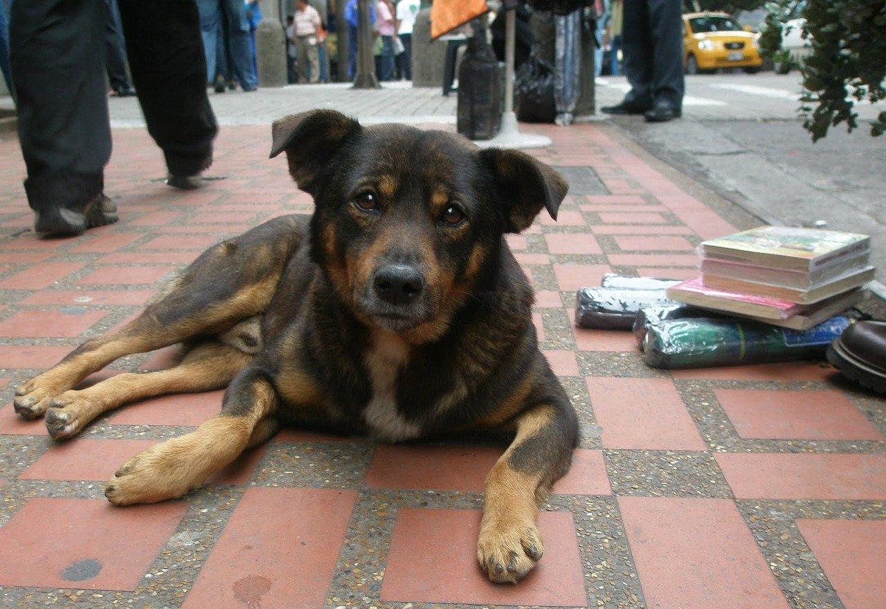 Milano: rifugio per i senzatetto e per i loro cani