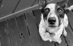 Cuidar a tu perro: cuidados del perro y recomendaciones