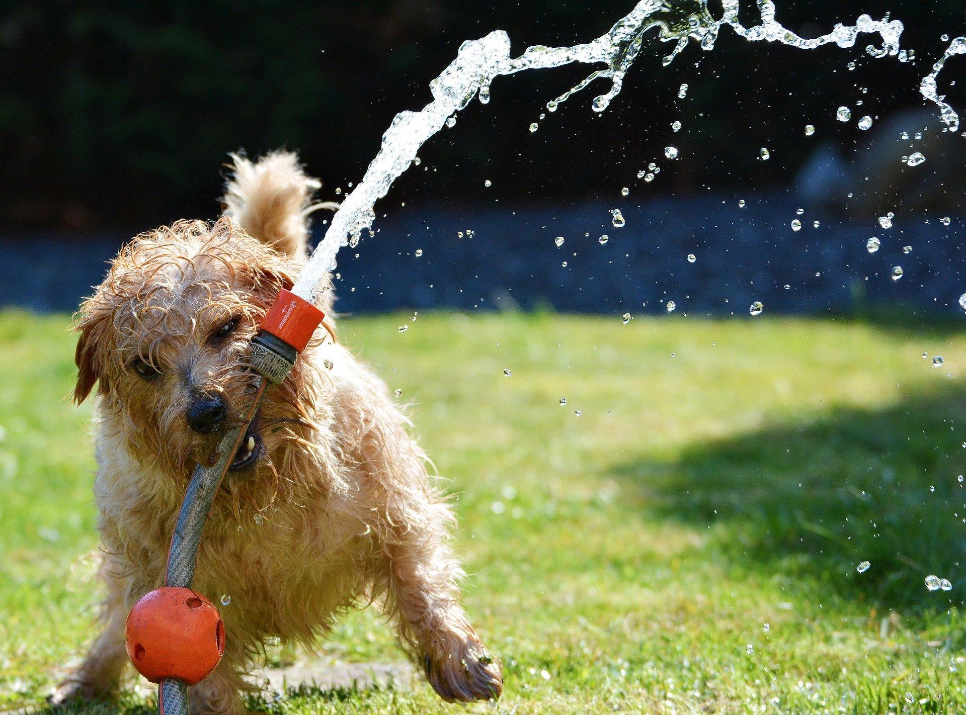 Lavaggio cani self service cos'è e come funziona