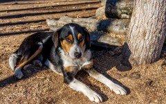 Ipercalcemia nei cani: sintomi e cure della malattia