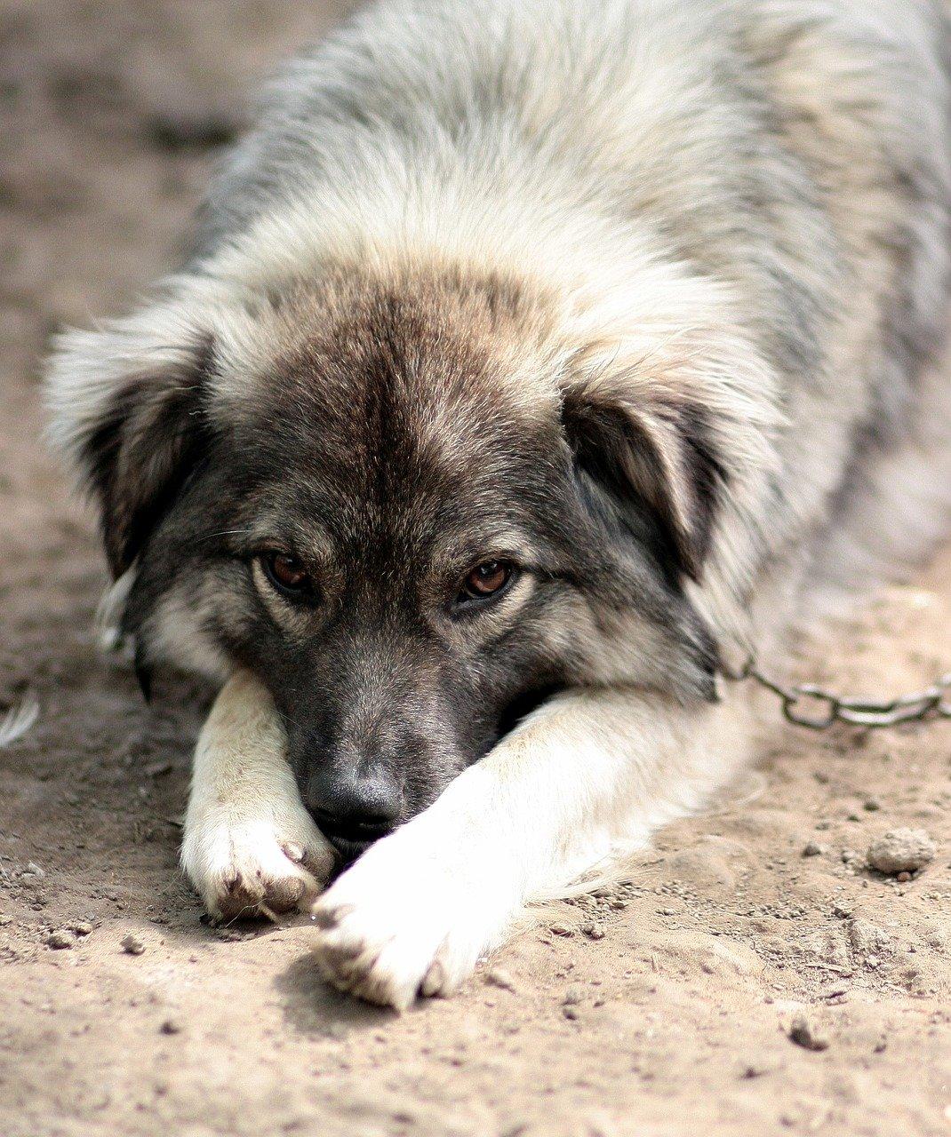 Antidolorifico per cani scegli quello che fa per lui