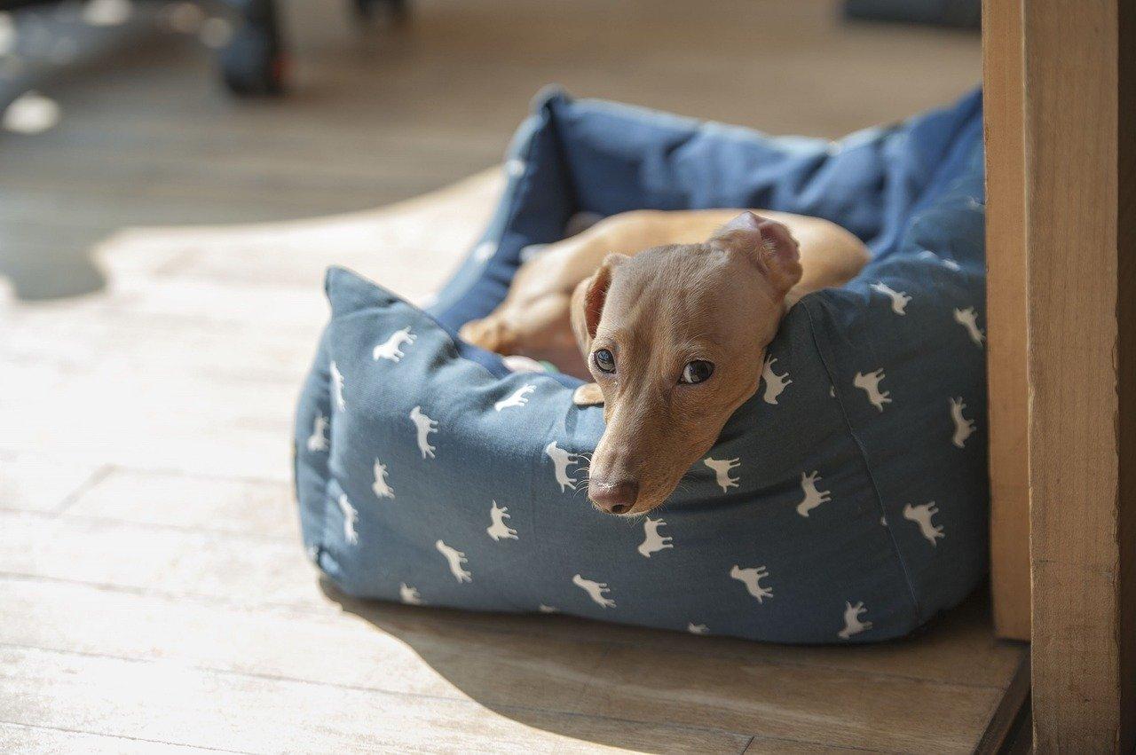 Come educare un cane a stare solo in casa in poco tempo