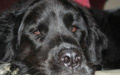Le principali malattie del cane: quali sono?