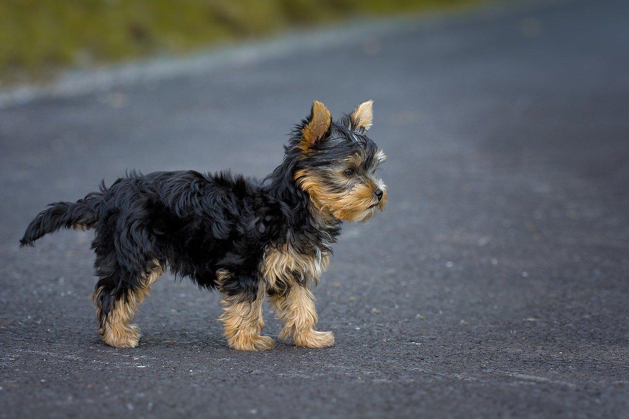 Cani di piccola taglia: come e dove porteli adottare