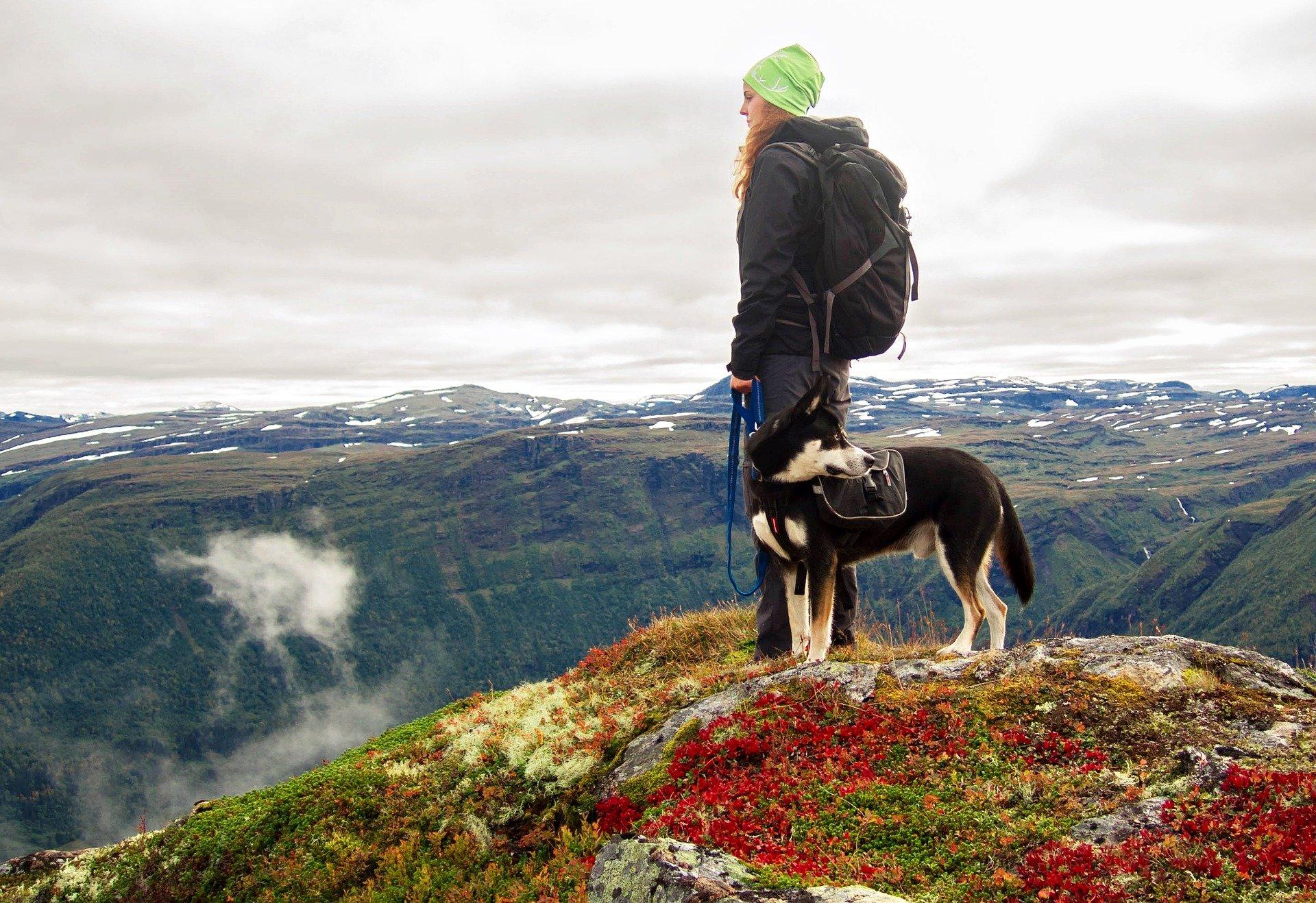 Cura del cane in montagna e sulla neve