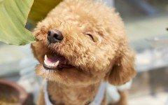 Las razas de perros más pequeñas perros pequeños
