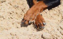 Reumatismo en perros