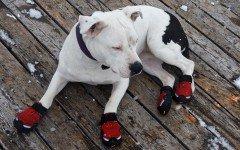 Scarpe per cani: caratteristiche e modelli