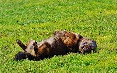 Pulce del cane: cause e rimedi per questo parassita
