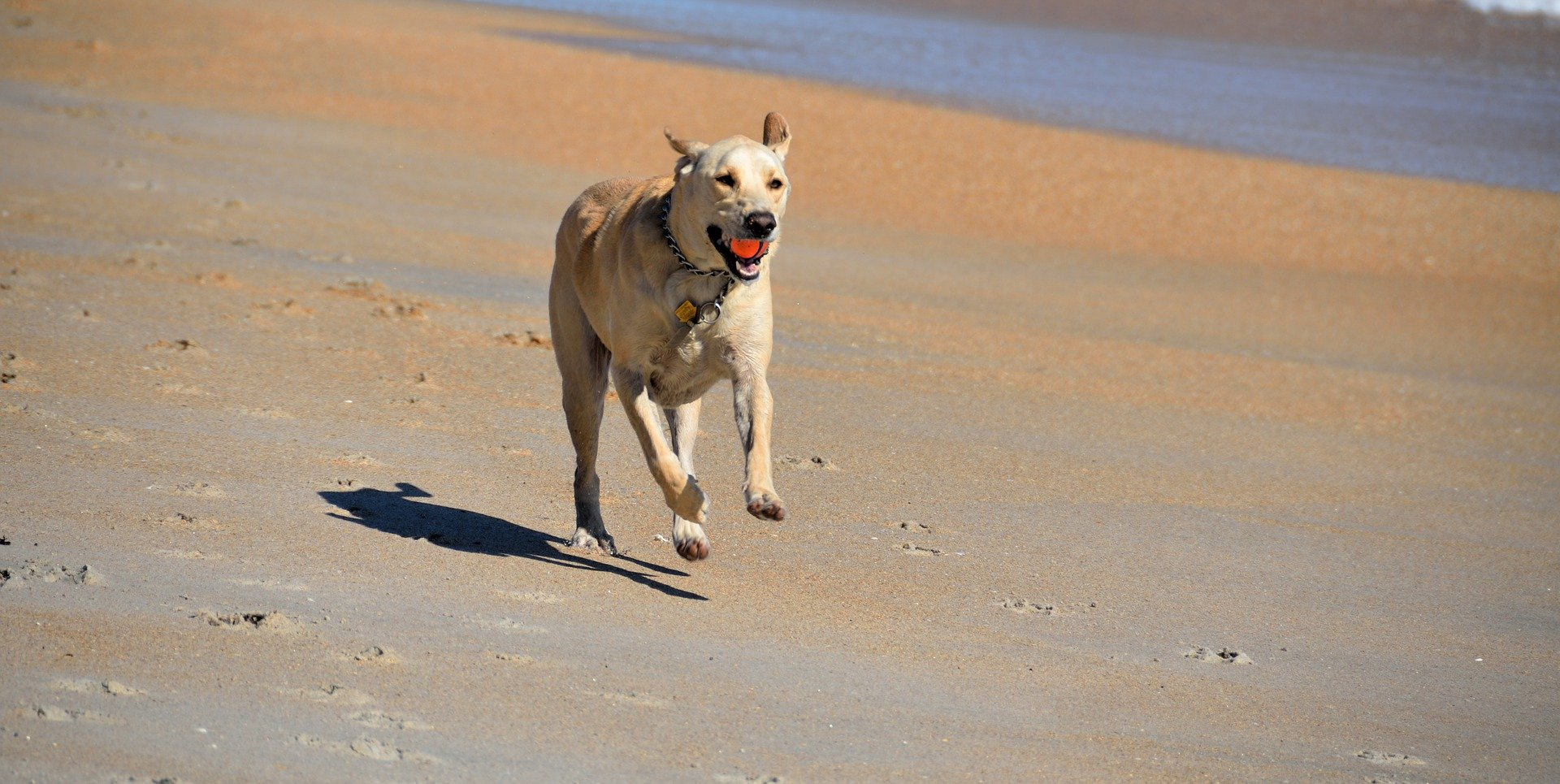 Integratori per cani a cosa servono e la loro utilità