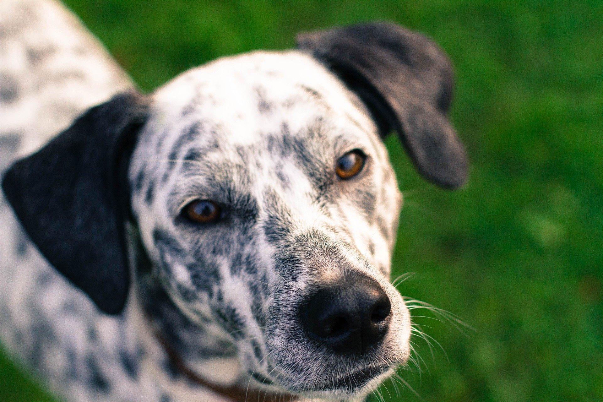 Cani non vedono solo in bianco e nero ecco il perché